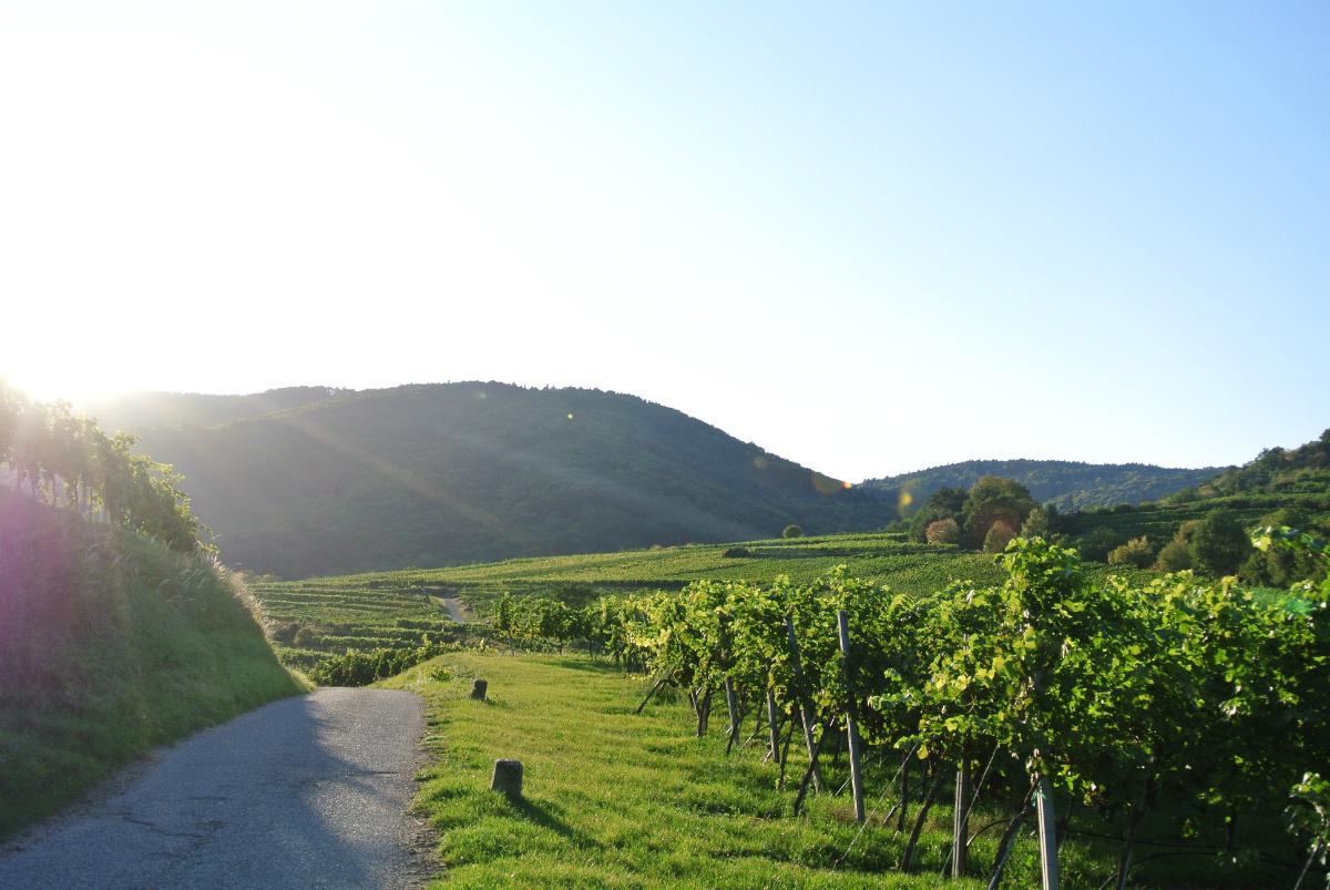Wanderweg in der Wachau