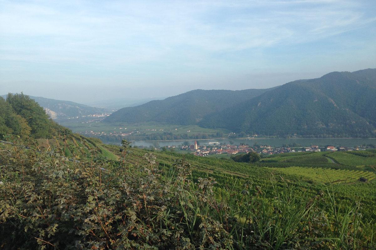 Blick von oben auf die Wachauer Weinberge und Weißenkirchen